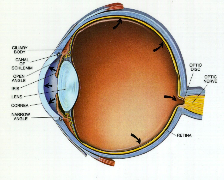 9c1604fc9d Το χρόνιο γλαύκωμα ανοικτής γωνίας. Αποτελεί τη πιο συχνή μορφή  γλαυκώματος. Είναι αποτέλεσμα του φαινομένου της γήρανσης.