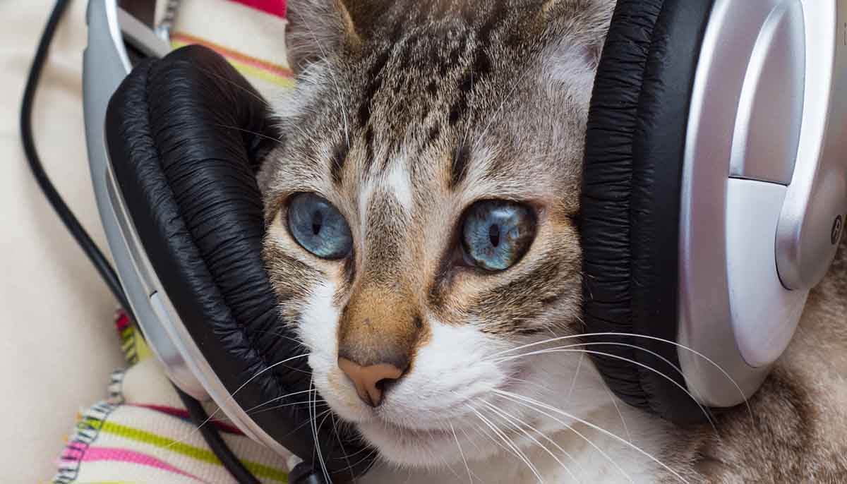 Shutterstock cat listening to music while wearing headphones 2