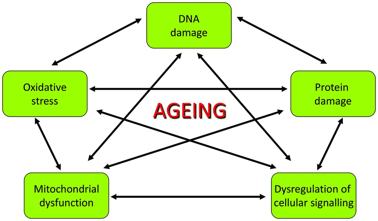 antiaging 2