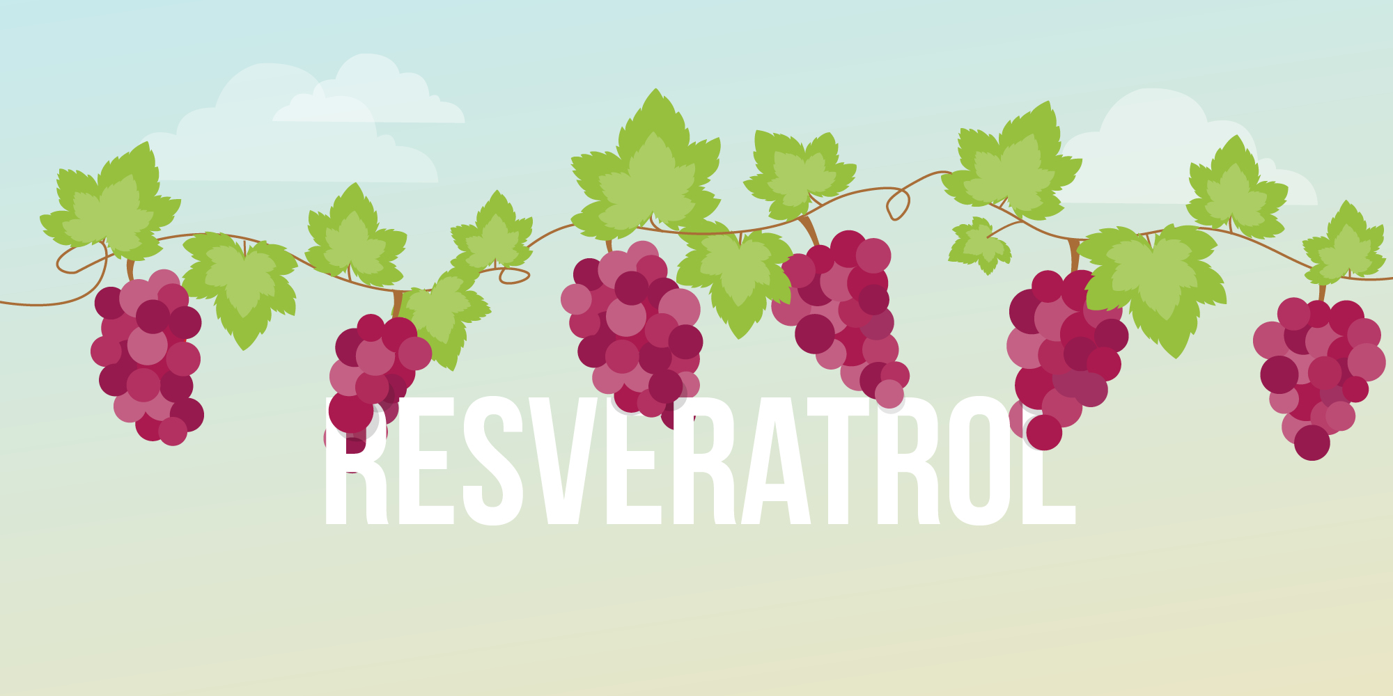 resveratrol good 5